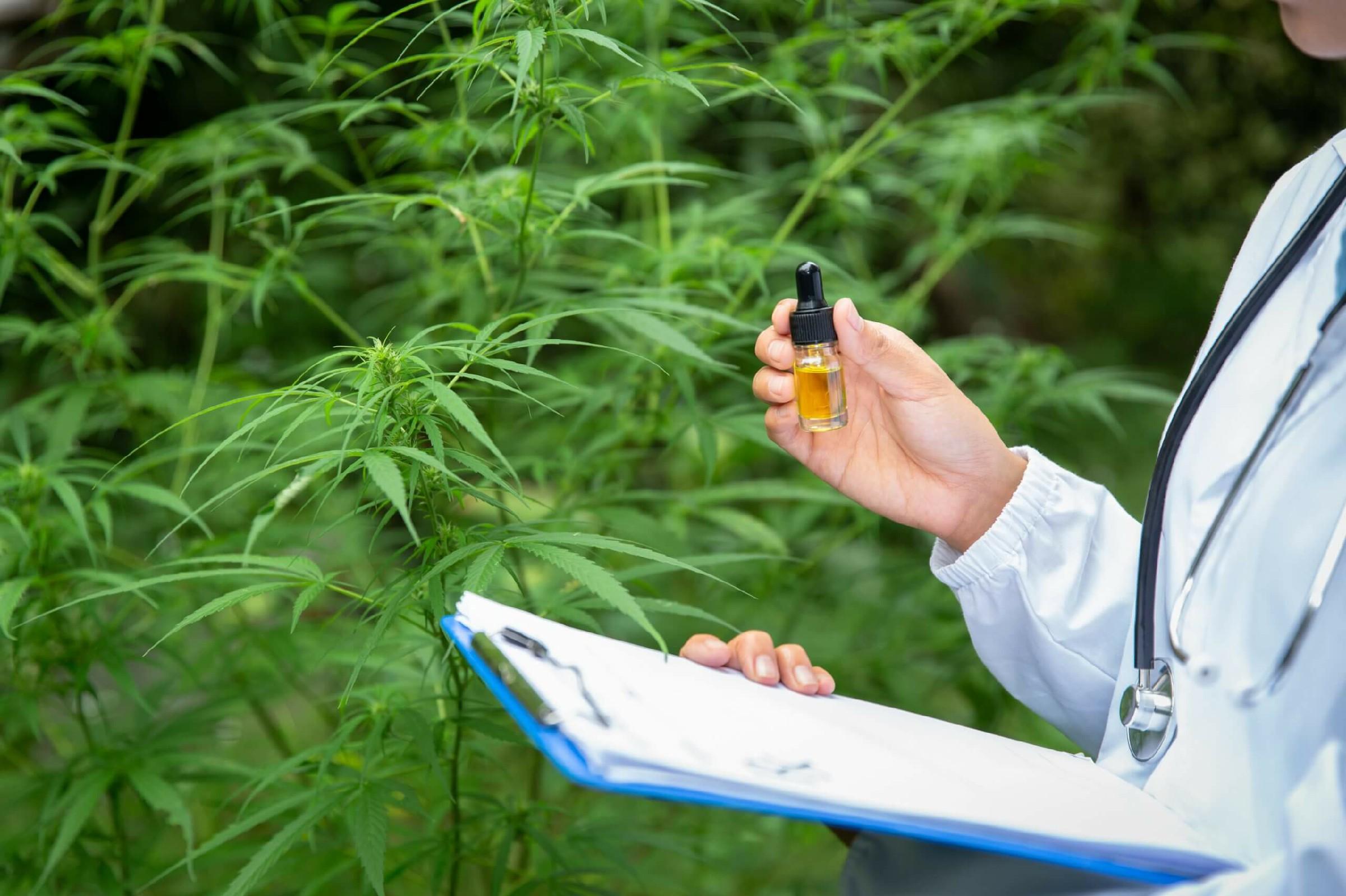 Cannabis 3